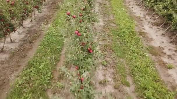 jabloňový sad z ptačí pohled