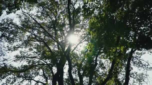 záblesky slunce skrze listy stromů