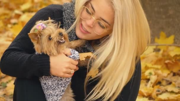 girl with a dog breed Yorkshire Terrier