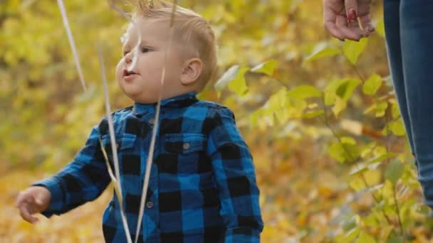little boy in the autumn forest