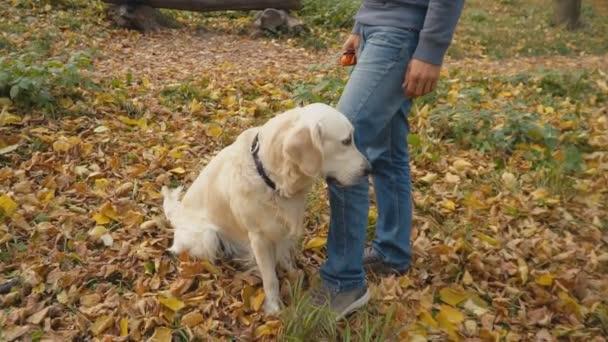 pes plemeno zlatý retrívr