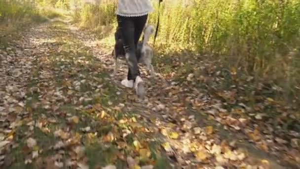 dívka s psí plemeno Husky