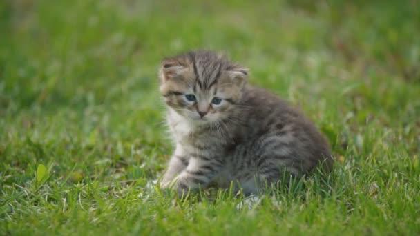 little kitten sitting in the green grass