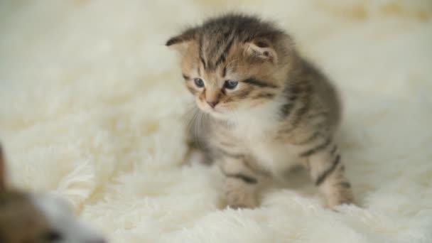 kis cica egy takarót