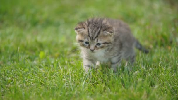 kis cica a zöld fű