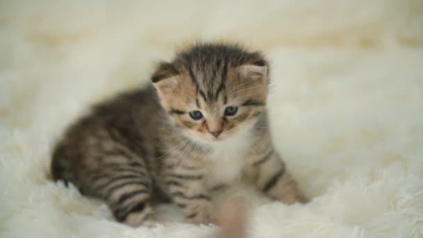 Malá kočička na přikrývce