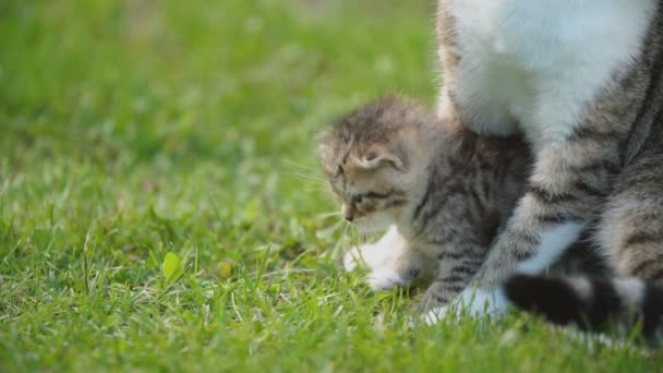little kitten sits under the protection of his mother
