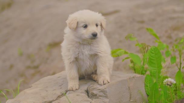 aranyos fehér kiskutya