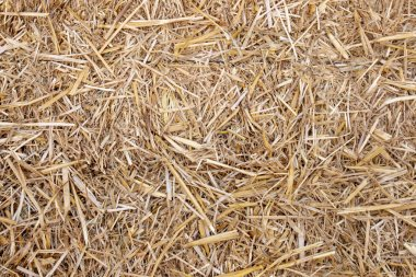 Close up view of organic straw background texturel.