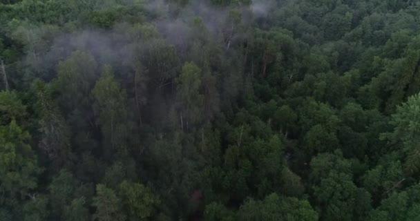 Letecký pohled na les v mlze. Létání nad les s kaňon v mlze. Dron nad mlhu