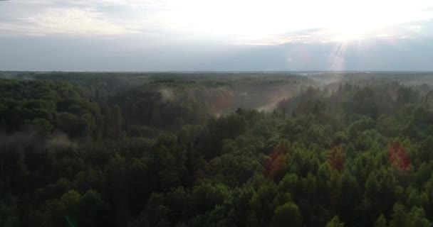 Aerial view of the forest. Fog in the forest, sun. The Golden tops of trees.