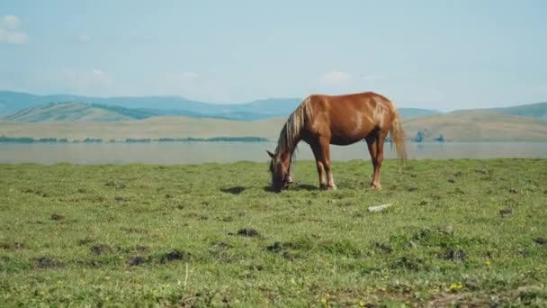 Brown horse with beautiful landscape on background