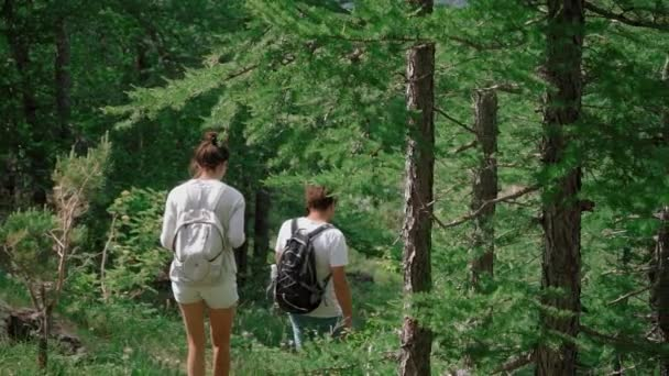 Rear view: couple with backpacks on their backs follow a path in the forest