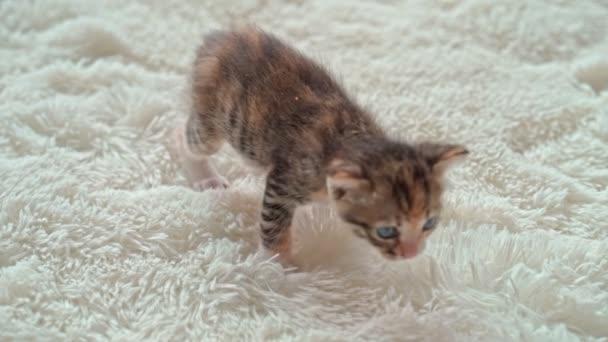 Aranyos kiscica egy szőrös fehér takarón.