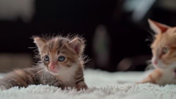 Cute little kittens on a furry white blanket