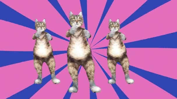Komische Pussycats schwenken Pfoten und Schwanz in einem energiegeladenen Tanzclip Sommerstimmung