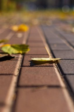 Autumn walking road with leaves at the curb. Green grass and orange leaves. Close-up view. Blurred background.