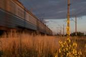 schönes Bild eines Zuges, der bei Sonnenuntergang durch die Felder fährt