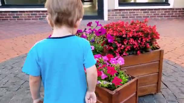 4k video of little toddler boy smelling beautiful pink flowers growing in big pots on city street