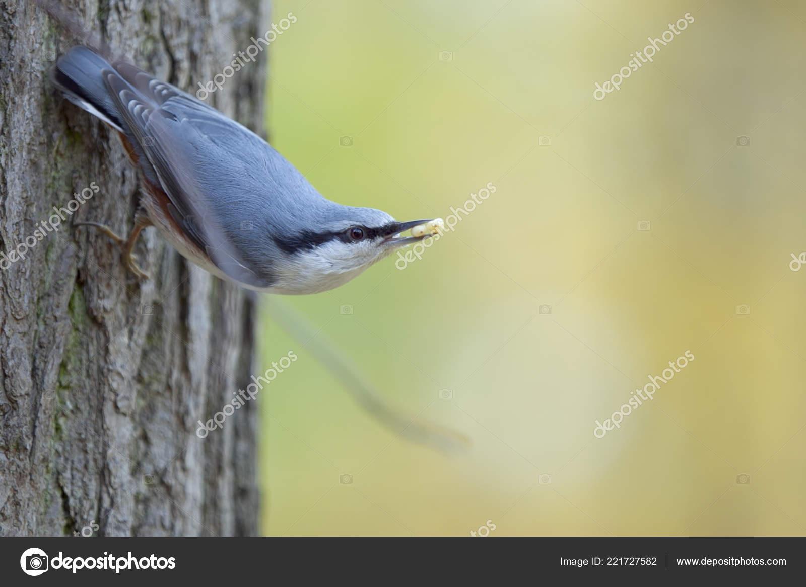 το πουλί σας σε μεγάλο