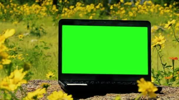 Laptop-Computer mit grünem Bildschirm. gefilmt in einem Feld gelber Blumen. Nahaufnahme. Vergrößern. Sie können es mit der Taste (Chroma-Taste) Effekt in Adobe nach Effekten oder andere Video-Editing-Software tun (siehe Tutorials auf youtube).