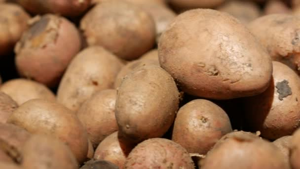 Potatoes with traces of soil are on a shelf in a supermarket. Young potatoes