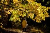 Egy nő egy könnyű kabátot sétáltam egy sárga juhar avenue.
