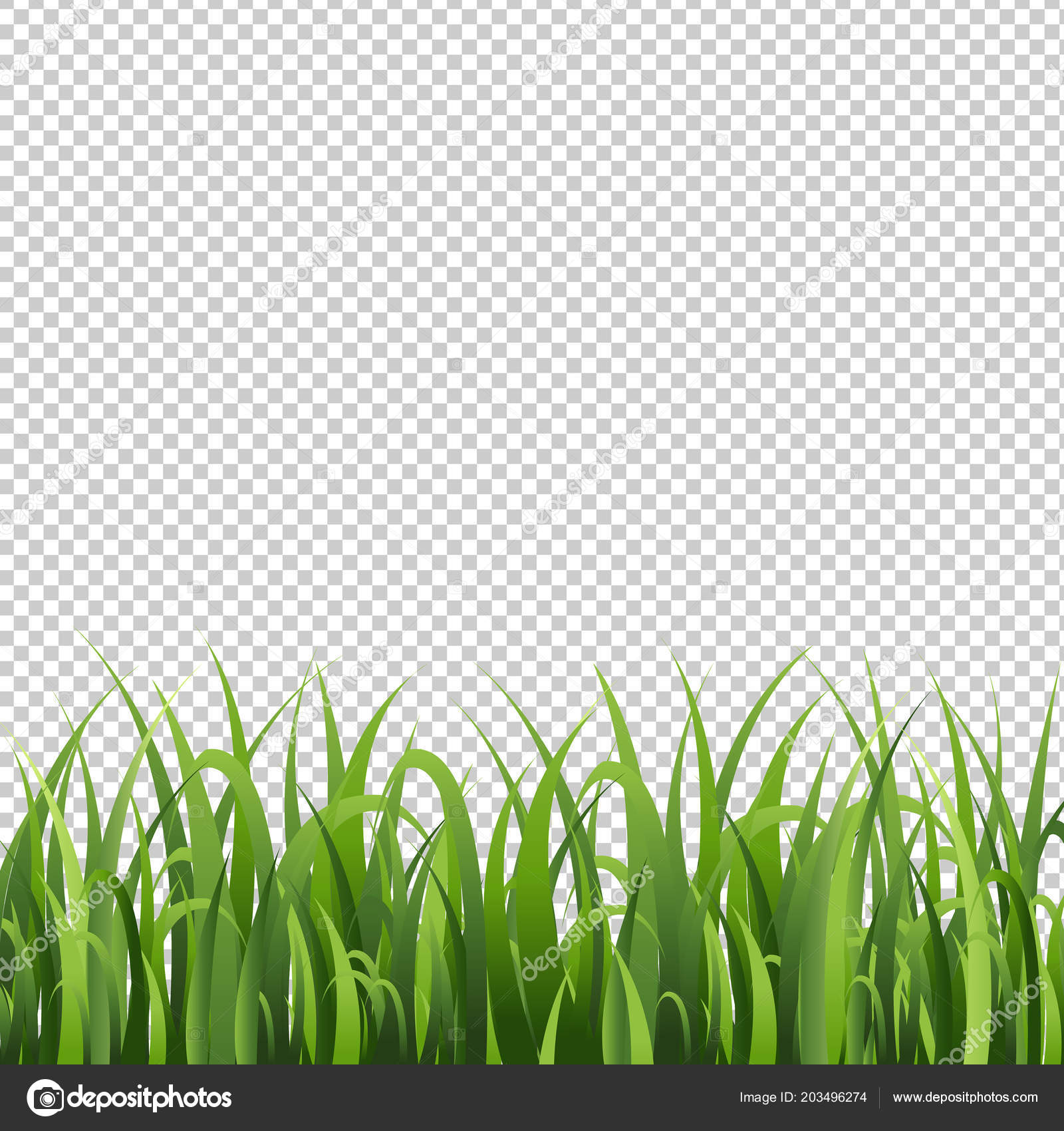 grass border no background summer green grass border isolated transparent background vector illustration stock