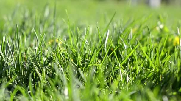Közelről a szél, a rét zöld fű, könnyű nap reggel.