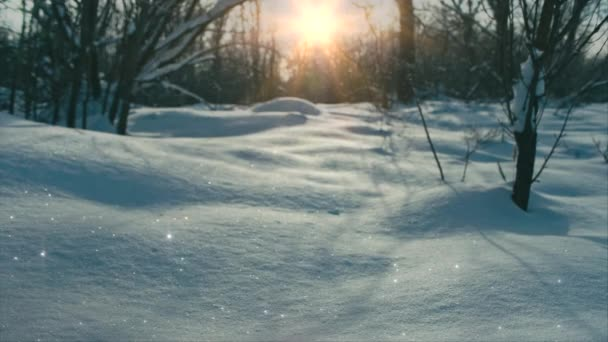 Fairy tale scenery of snow and sun, focus transition
