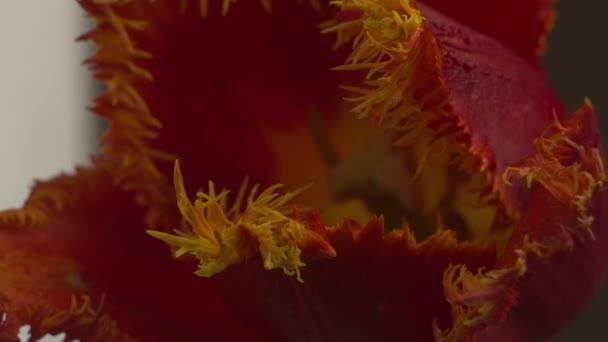 Abstraktní Supermakro květinové