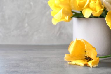 Box with beautiful tulips on grey table