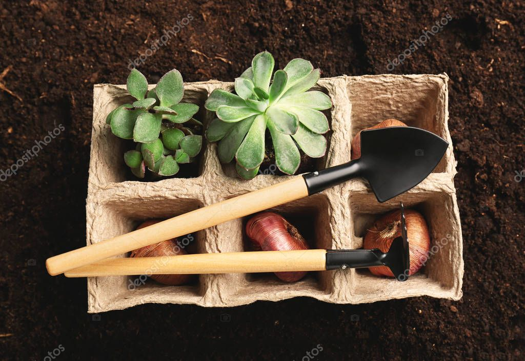 Peat pots with plants, bulbs and gardening tools on soil