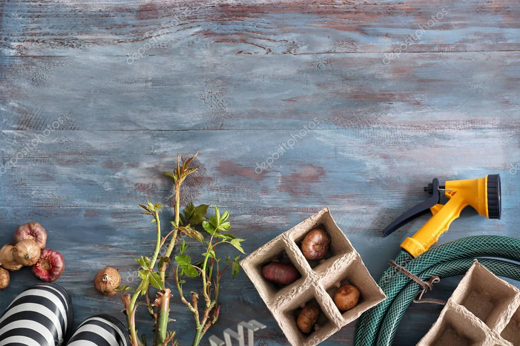Rubber boots, flower bulbs and gardening tools on wooden background