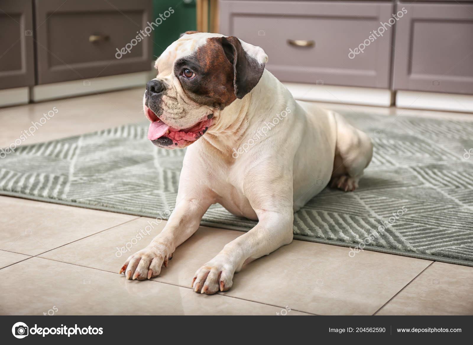 Süße Lustige Hund Küche — Stockfoto © serezniy #204562590