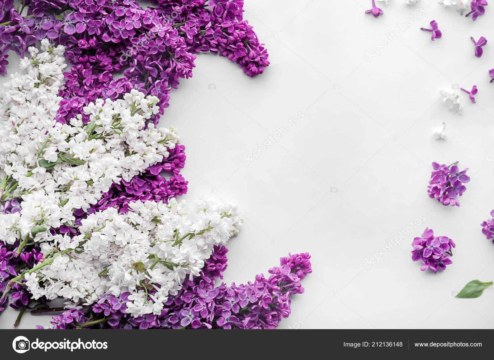 Composition Avec Fleur Lilas Sur Fond Blanc Photographie Serezniy