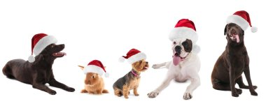 Cute funny animals in Santa hats on white background