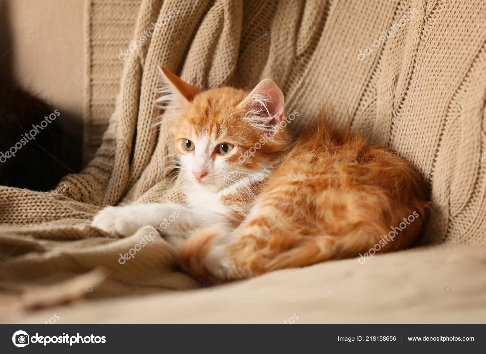 eben kočička péro