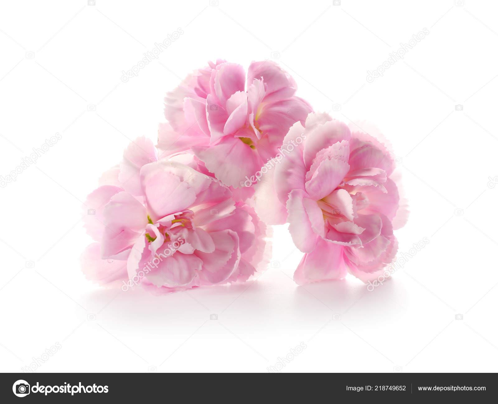 Beautiful Pink Flowers White Background Stock Photo Serezniy