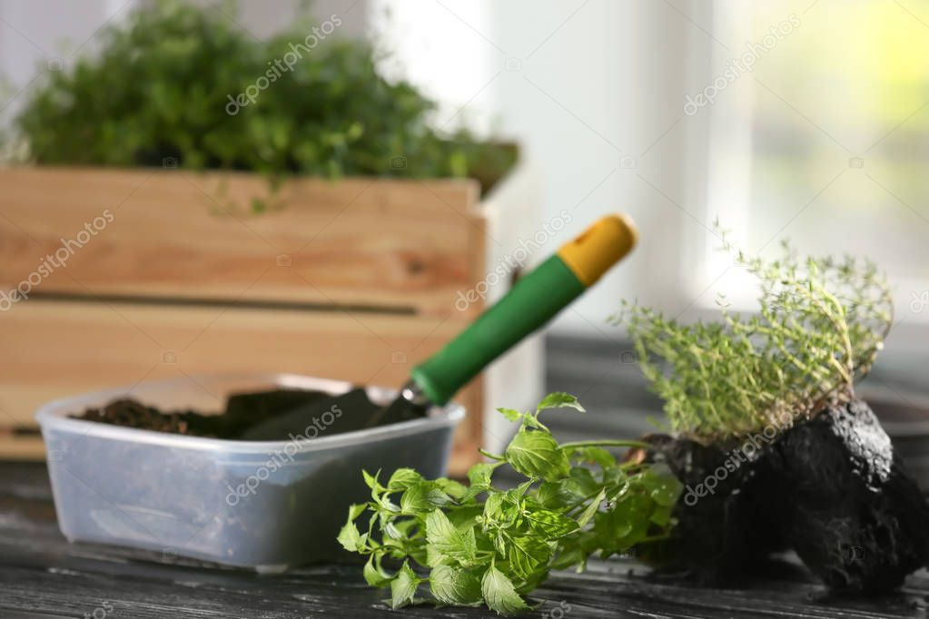 Plastic container with soil and fresh herbs on wooden table