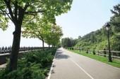 Strada asfaltata nel parco il giorno pieno di sole
