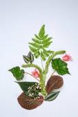 Složení s čerstvým tropickým listy a květy na barvu pozadí