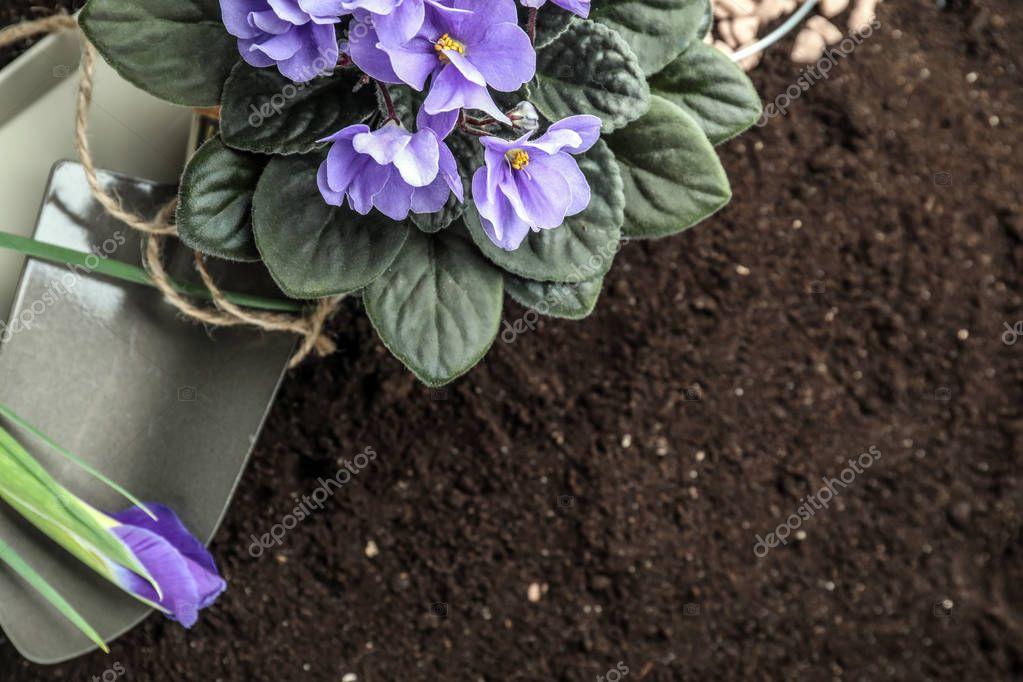 Green plant with gardening shovel on soil