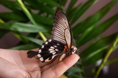 Beautiful butterfly sitting on female hand