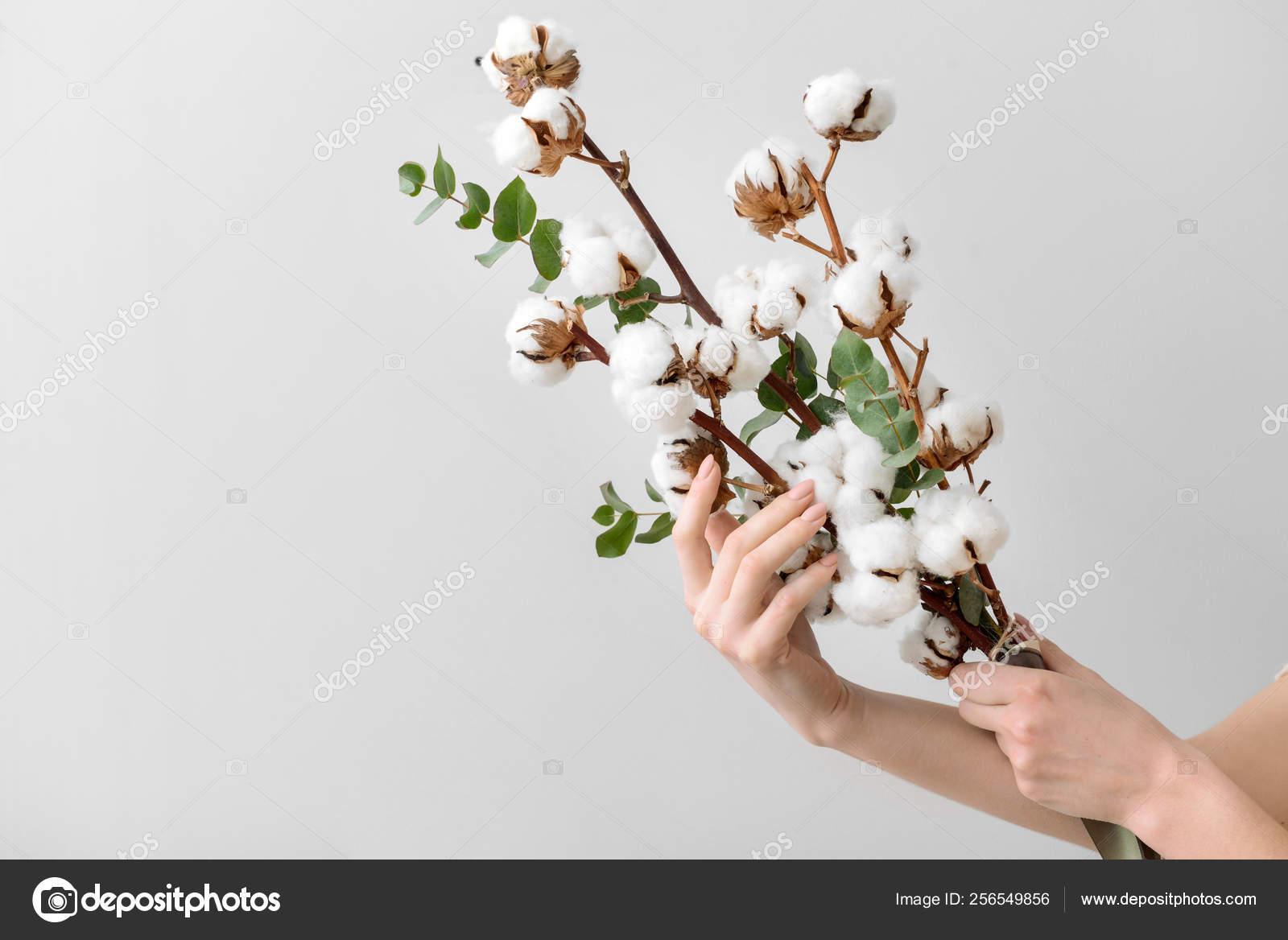 Branche Fleur De Coton female hands holding floral composition with cotton flowers