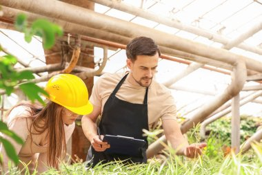 Young agricultural engineers working in greenhouse