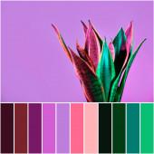 Barevná paleta s rostlinným zařízením Sansevieria