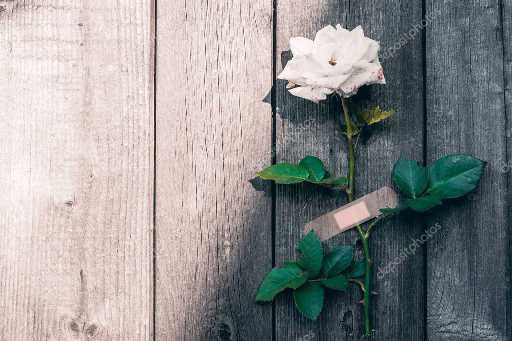 white rose on a wooden background, pasted Adhesive bandage.