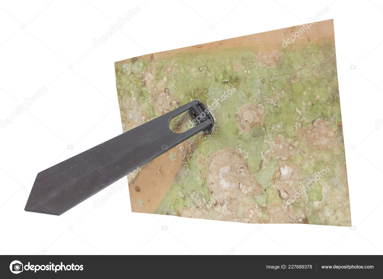 Old Dirty Fungus Back Photo Frame Stand Isolated Clipping Path