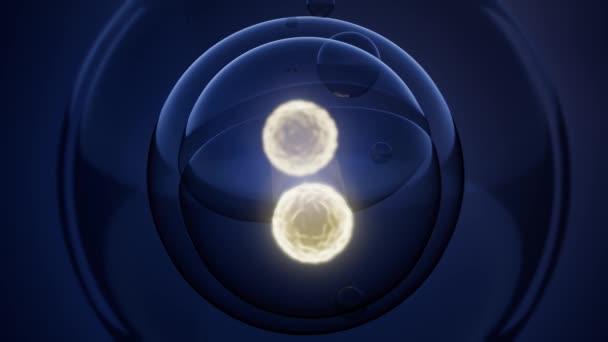 Loop otáčení buněčného dělení ilustrace